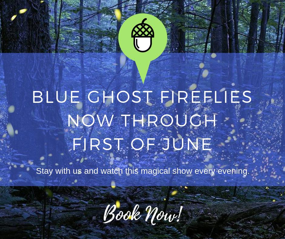 blue ghost fireflies 2019