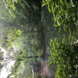 King Pond